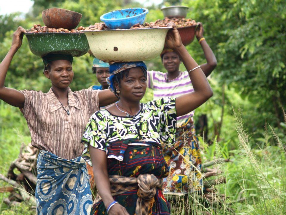 apoyar a la asociación local Ragussi en sus actividades de producción de mantequilla de karité así como la millora de las condiciones laborales y autonomía de las mujeres que forman parte de la organitzación.